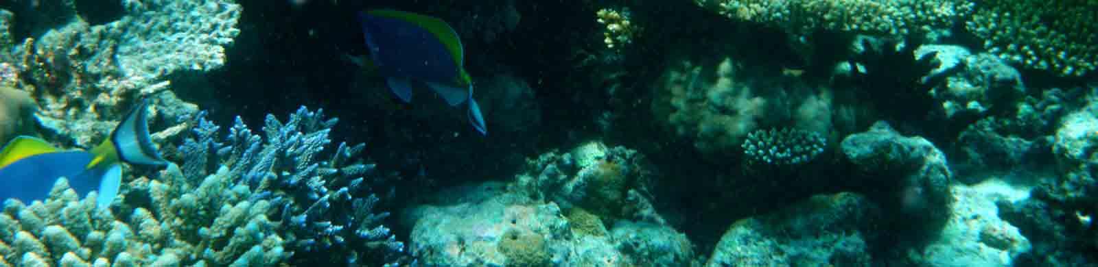 underwater scene byron coaching